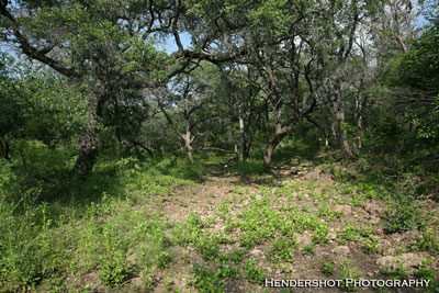 Typical South Texas creek bottom at Brushy Hill. Brushy Hill Ranch offers the most affordable bowhunting in South Texas. Located in Uvalde county, the area is famous for producing world-class trophy whitetails! Book your next South Texas bowhunt at Brushy Hill Ranch!